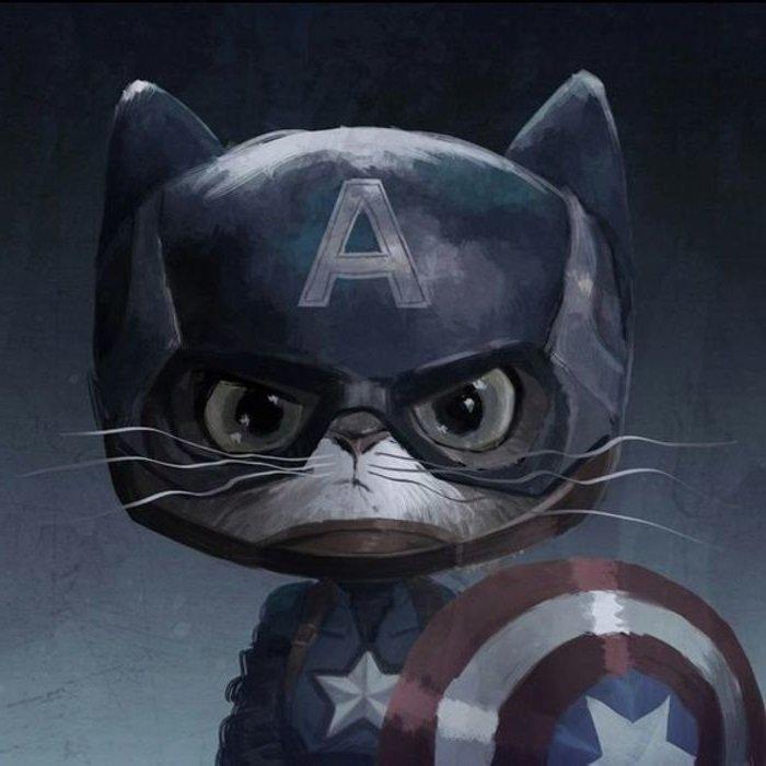 капитан америка кот