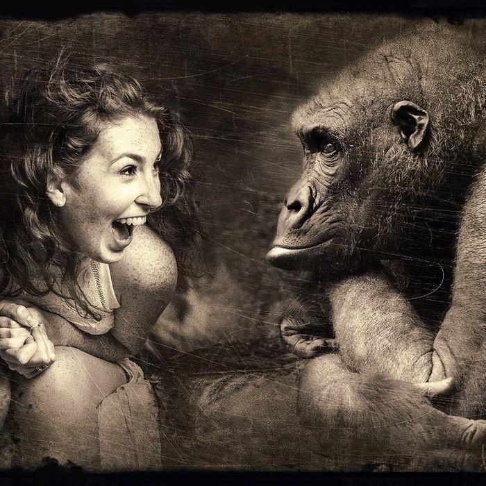 уступки. обезьяна