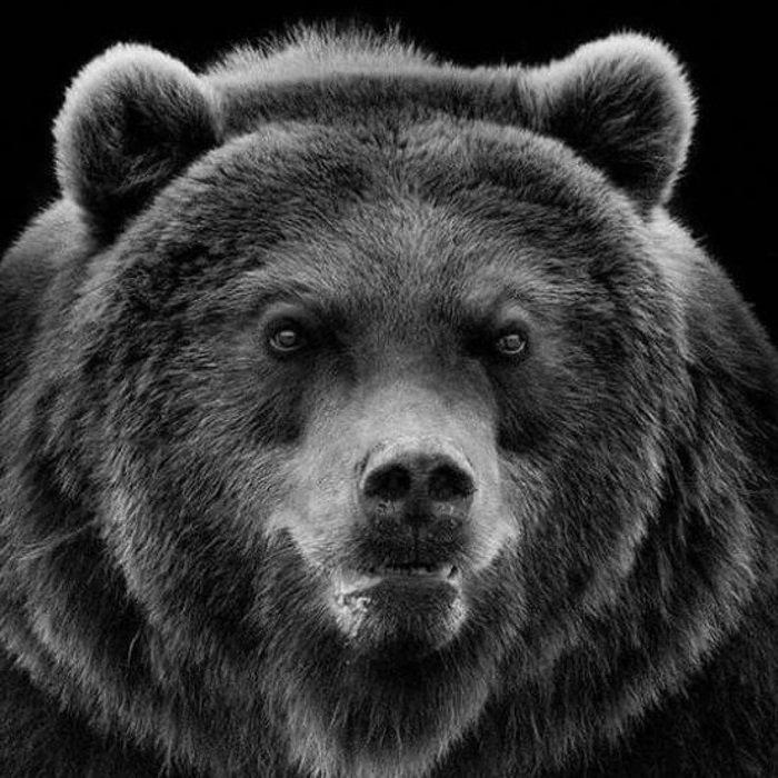 батя медведь
