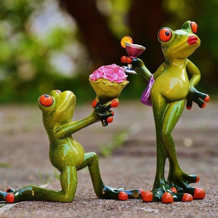 любовь лягушек