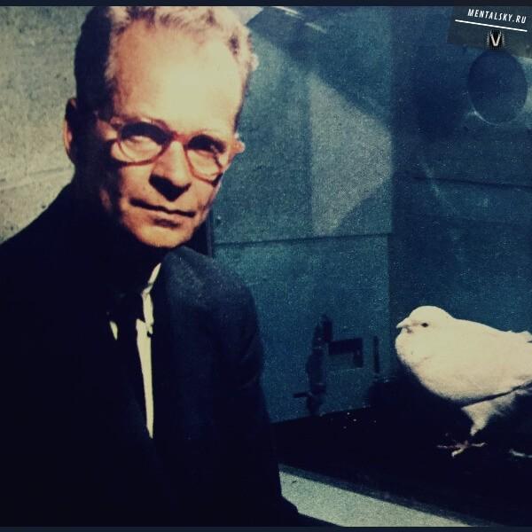 опыты скиннера над голубями