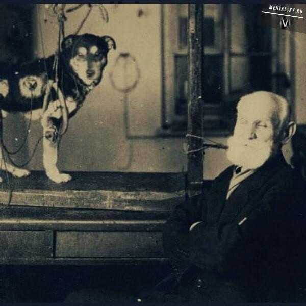 опыты павлова над собаками