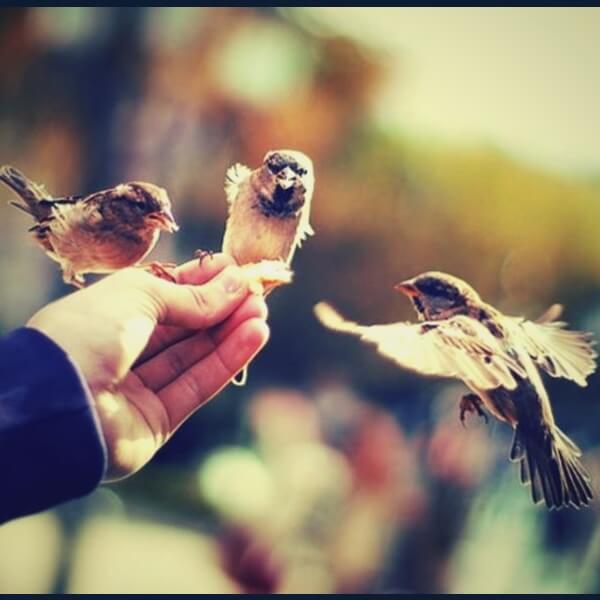 эмпаты и животные