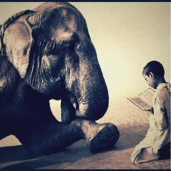 сознание у животных