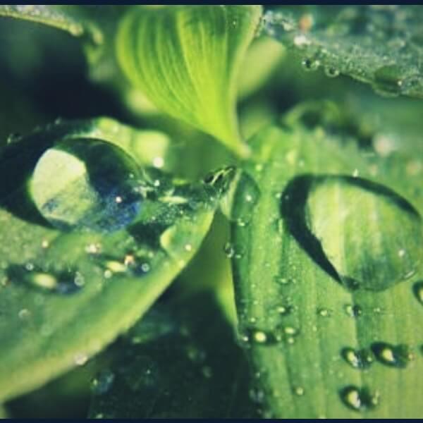 капли воды на листке