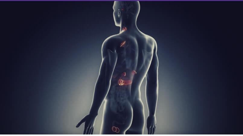 За что отвечает эндокринная система у мужчин