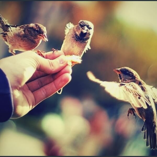 доброта и птицы