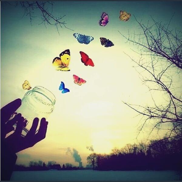 летят цветные бабочки