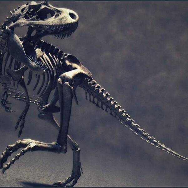 факты о динозаврах велоцерапторах
