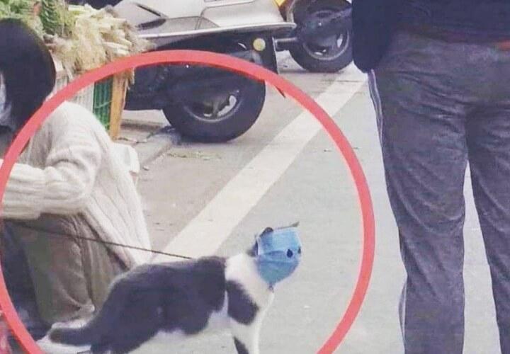 кошка в защитной маске